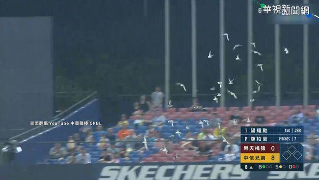 大地震前兆?! 鳥群低空飛入中職球賽 | 華視新聞
