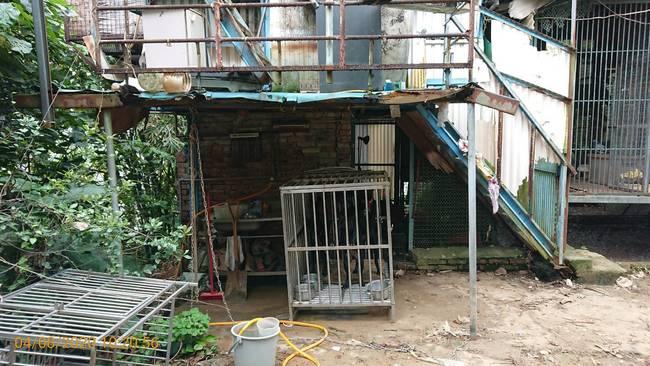 3隻米克斯犬擠超小籠舍 飼主被罰2000元   華視新聞