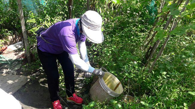 登革熱疫情流行期 雨後4招阻病媒蚊孳生 | 華視新聞