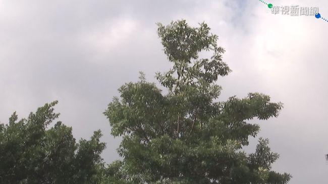 颱風「昌鴻」將生成!彭啟明:可能影響國慶連假 | 華視新聞