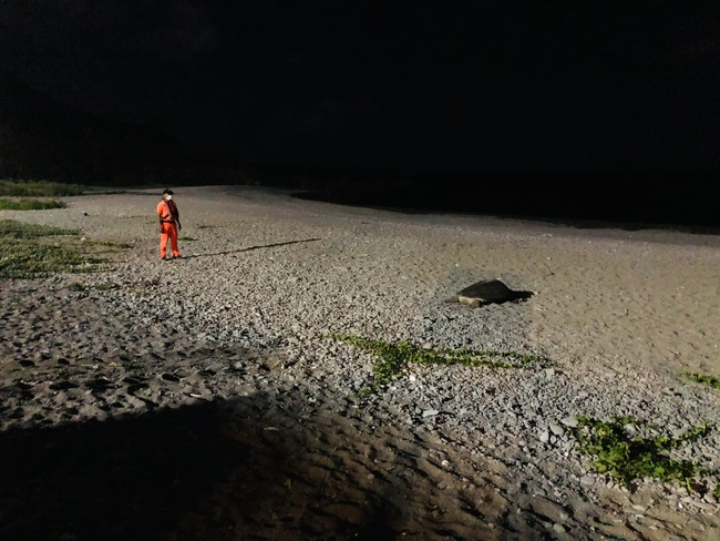 綠蠵龜紅頭嶼沙灘產卵 海巡暖心守護到凌晨   華視新聞