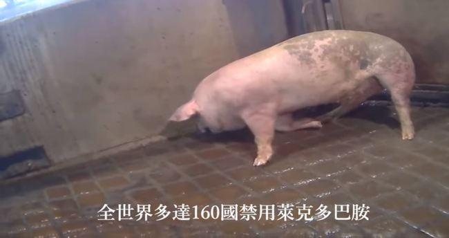 防檢局斥「瘦肉精豬顫抖」影片是假消息 國民黨回應了 | 華視新聞