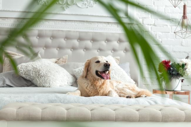 【懶人包】毛爸媽不苦惱!盤點全台5大寵物友善飯店   華視新聞