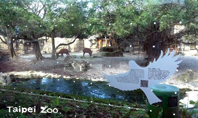 動物園玻璃白點不是髒!是「友善窗貼」防鳥誤撞   華視新聞