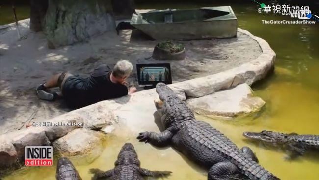 超像哥吉拉! 巨鱷佛州高球場散步 | 華視新聞