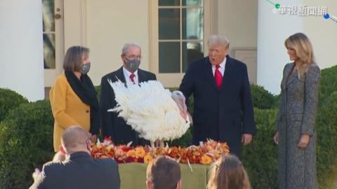 任內最後的感恩節 川普白宮特赦火雞