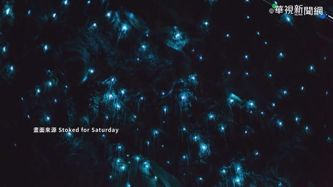 紐西蘭特有物種 魔幻藍光蟲閃耀 | 華視新聞