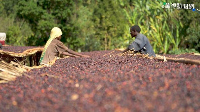 年產35萬噸 衣索比亞3成咖啡出口   華視新聞