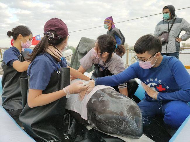 58天逾2000人次照護 擱淺海豚順利海放   華視新聞