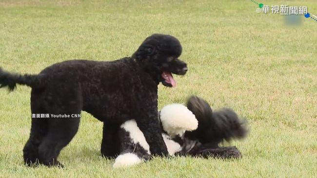 美國總統愛狗成癡 白宮寵物大盤點 | 華視新聞