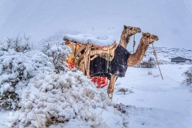 罕見!中東、撒哈拉沙漠極凍 「雪中駱駝」模樣曝 | 華視新聞