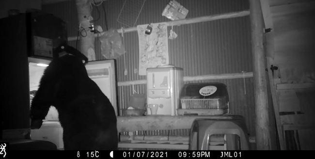 熊熊來了!大公熊闖農舍覓食 開冰箱、翻電鍋偷吃 | 華視新聞
