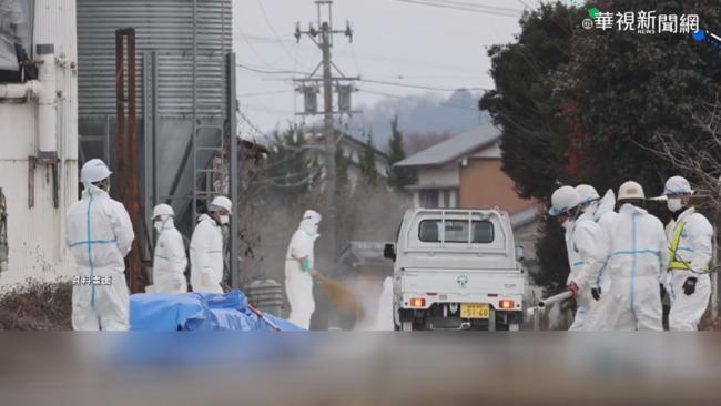 日本禽流感蔓延 撲殺逾百萬隻雞!   華視新聞