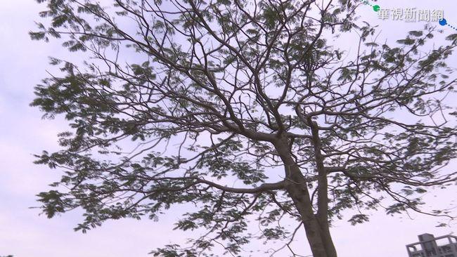印度小情侶掛樹上慘死!兇手竟是女方家人 | 華視新聞