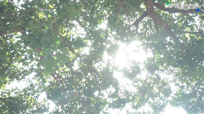 天氣持續穩定!高溫達28度 「228連假」天氣出爐 | 華視新聞