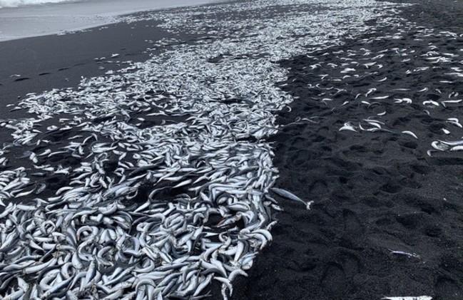 大地震前兆?日本小島驚見魚群集體死亡 | 華視新聞