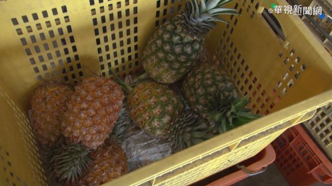 鳳梨被中國禁後 謝金河:台灣宜重建食品加工產業鏈 | 華視新聞