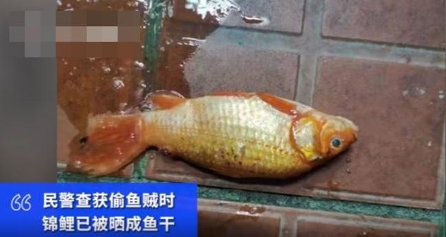 偷21萬錦鋰全曬成「魚乾」 賊:以為不值錢 | 華視新聞