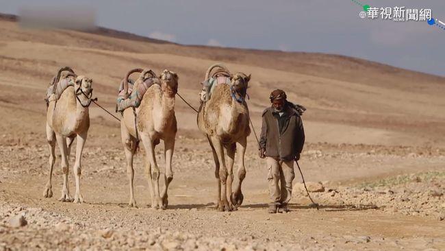 商機上看億元! 「駱駝奶」營養價值高 | 華視新聞