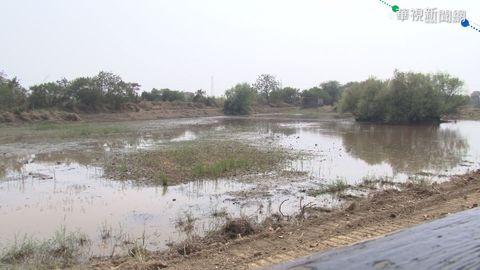 老天不下雨 官田水雉園區池塘乾涸