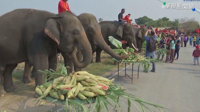 療癒! 德國推綿羊抱抱 泰國大象日祈福 | 華視新聞