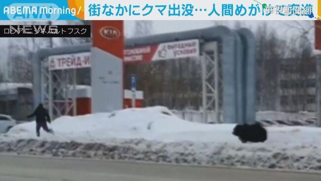 俄羅斯寵物幼熊突抓狂 追趕飼主   華視新聞
