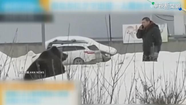 「戰鬥民族」寵物不一般! 帶熊散步嚇壞人   華視新聞