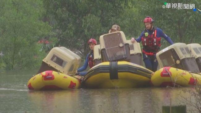 澳洲雪梨大洪水 救難隊水中救出20犬   華視新聞