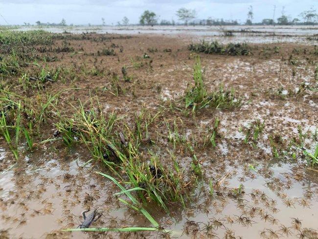 澳洲逢60年來最嚴重洪災 數千蜘蛛爬滿民宅逃生 | 華視新聞