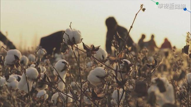 中國直播主大推新疆棉 趁機賺一筆 | 華視新聞
