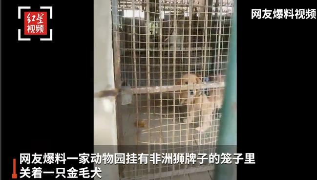 中國四川動物園標非洲獅卻放黃金獵犬...園方出面解釋 | 華視新聞