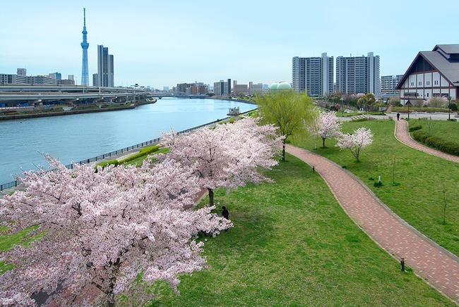 東京櫻花創1200年紀錄 《CNN》:氣候危機徵兆 | 華視新聞