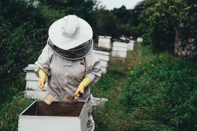 信義區「公寓頂樓養蜂」嚇壞鄰居 眾讚:是好事!   華視新聞