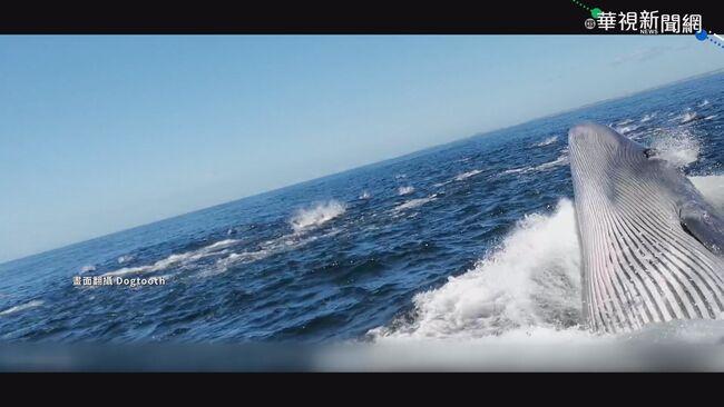 鯨魚撞旅遊船 男子落水險成「飼料」 | 華視新聞