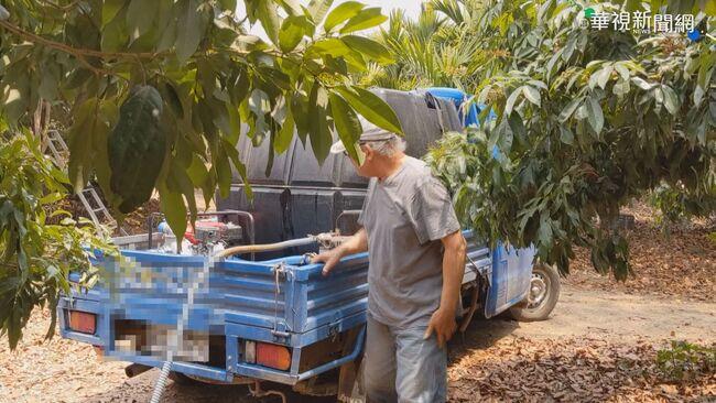 大旱荔枝落果3~4成 果農急載水灌溉   華視新聞