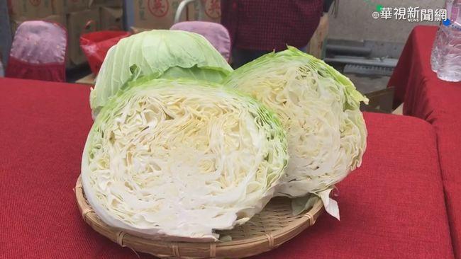 刀切高麗菜會變黑 婆媽授「保鮮撇步」可吃一個月 | 華視新聞