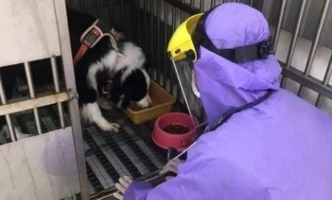 狗狗隔離14天!動保處帶回新北確診者牧羊犬照料 | 華視新聞