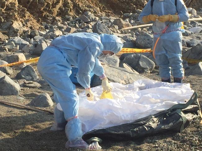 中國豬隻屍體海漂金門 檢出非洲豬瘟病毒核酸陽性 | 華視新聞