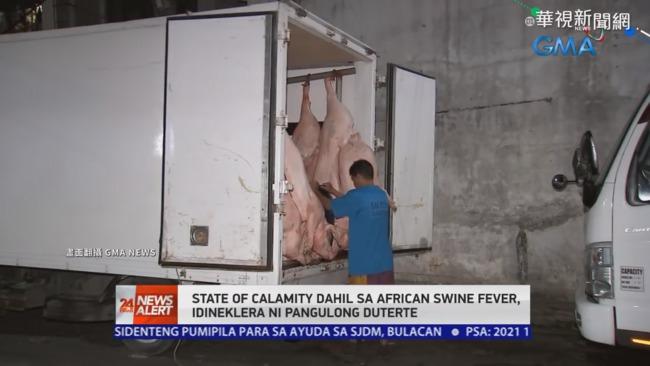 非洲豬瘟止不住 菲律賓進入災難狀態 | 華視新聞