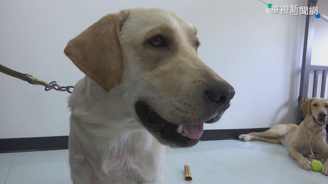出門幫狗狗戴罩無法散熱 獸醫:動物不會傳染新冠病毒給人 | 華視新聞