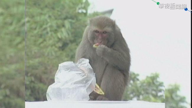 致命「猴B病毒」! 北京獸醫解剖染病亡 | 華視新聞