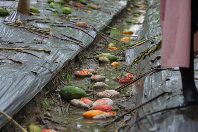 農損3.3億!農委會公布救助辦法 6縣市全項目補助   華視新聞