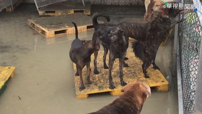 「零撲殺」上路4年 全國流浪犬逾15萬隻無明顯增加 | 華視新聞