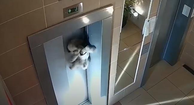 牽繩「卡電梯」狗狗驚悚吊掛門外 路過男英勇解救! | 華視新聞